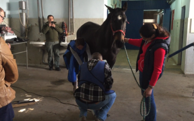 Работа на стойне с лошадьми: